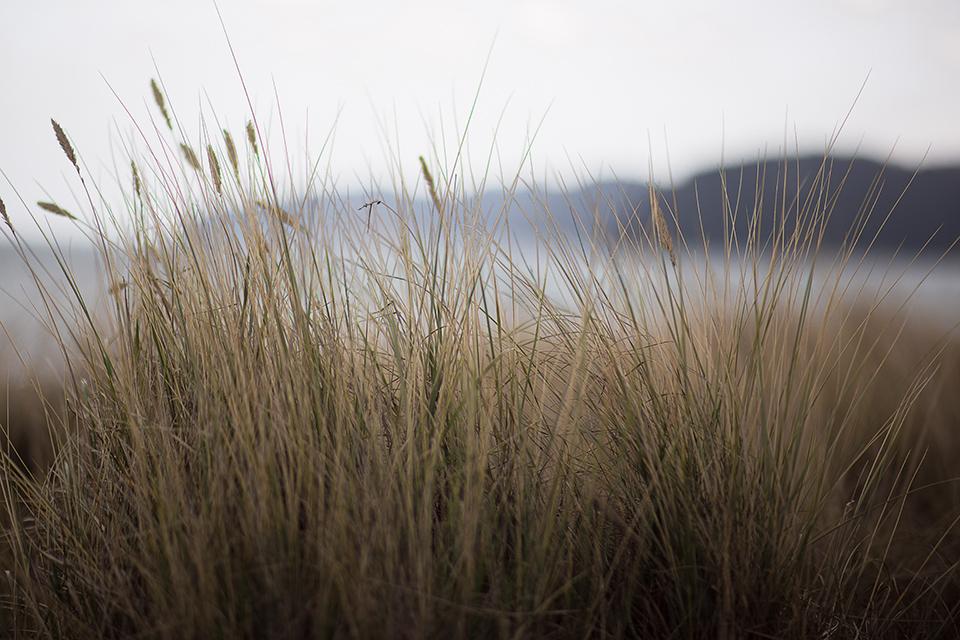 Gräser-an-der-Ostsee