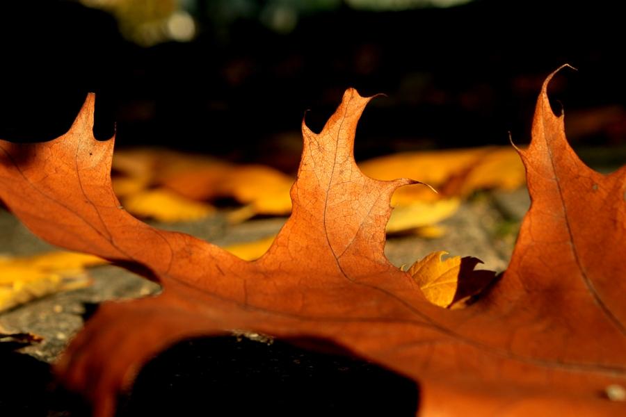 goldenes blatt im herbst