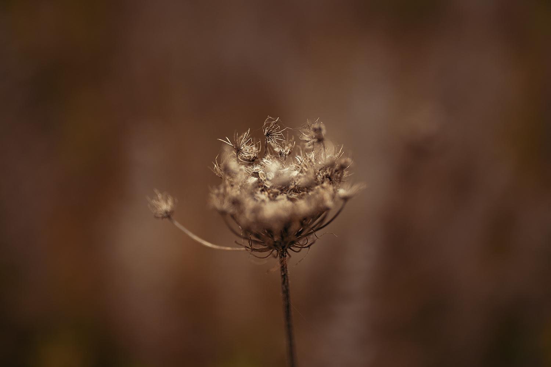 vertrocknete-pflanze