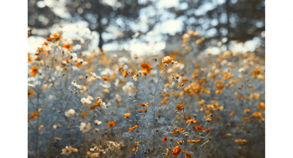 Blumen an einem sonnigen Tag