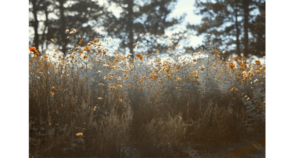 Eine hübsche Blumenwiese und Tannenbäume