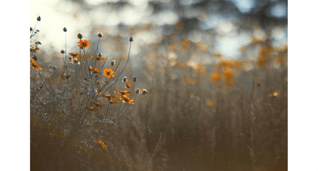 Foto von Blumen auf der Wiese