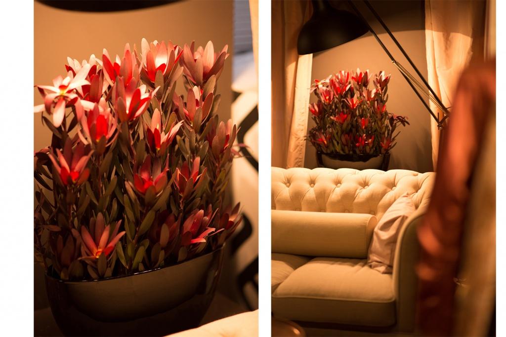 Wunderschöne Pflanzen in rot