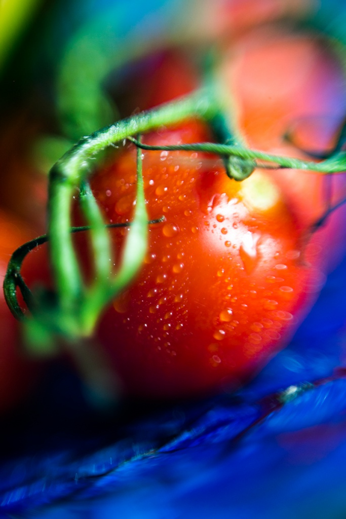 Tomato with green and waterperls