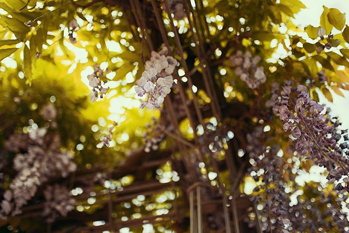 Lila Blüten an einem Baum