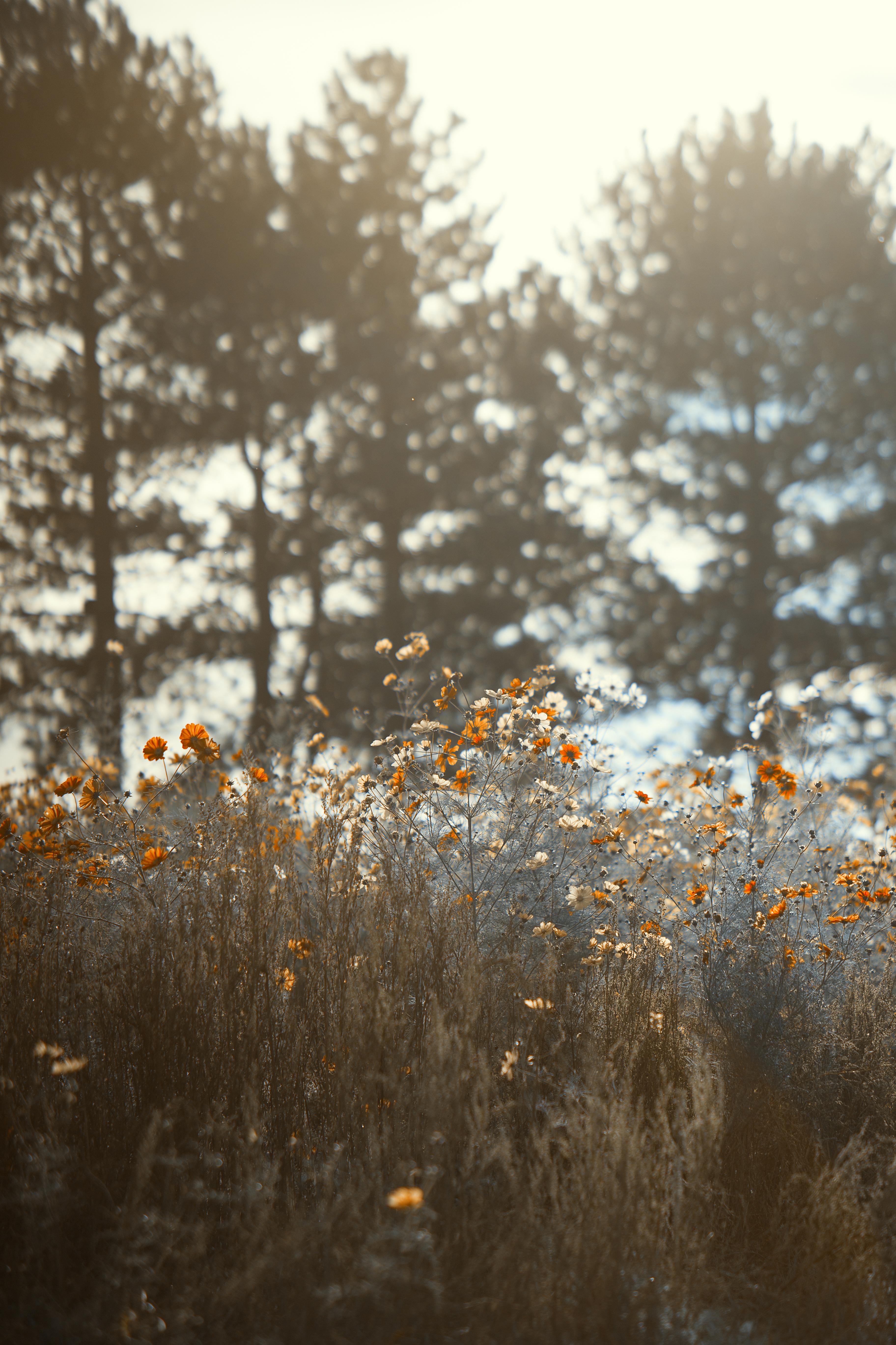 Waldstück Blumenwiese