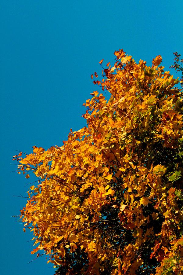 warm-dunkel-farb-kontrast-fotografie-tipps-farben-hoch