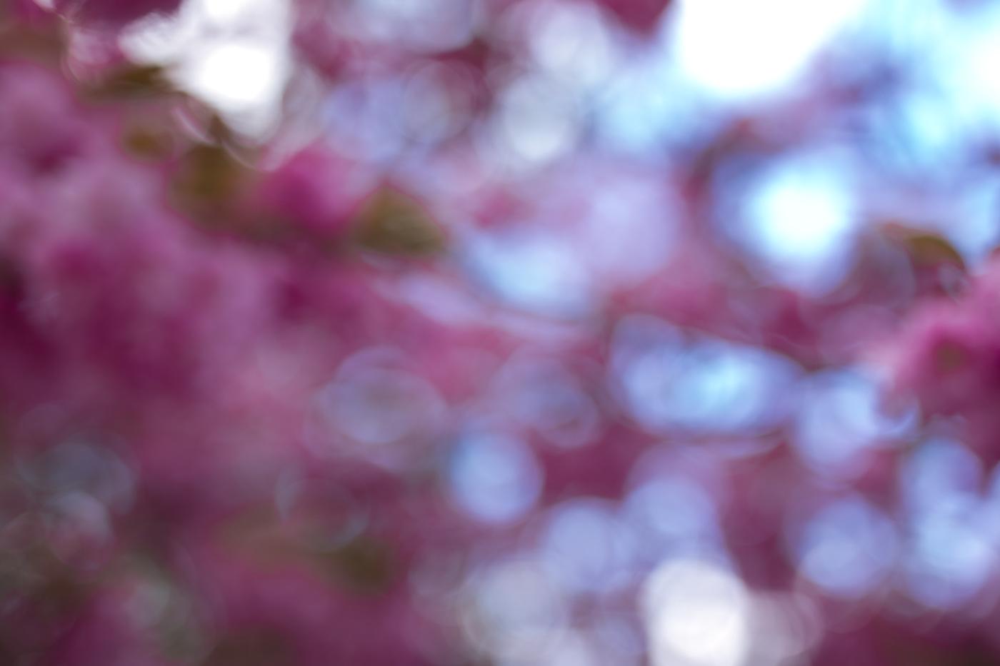 bokeh blau pink