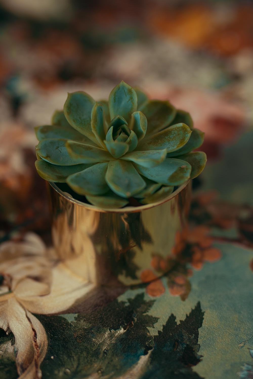 Kaktus fotografiert mit Aufheller