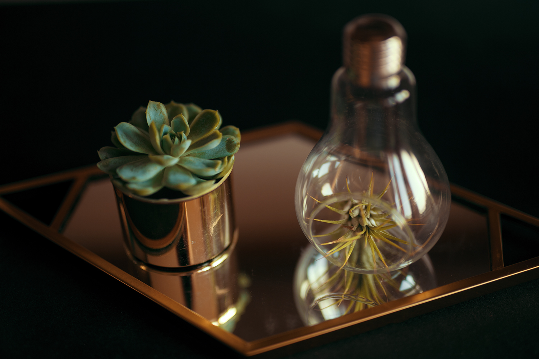 Tillandsien in Glühbirne auf goldenem Regal