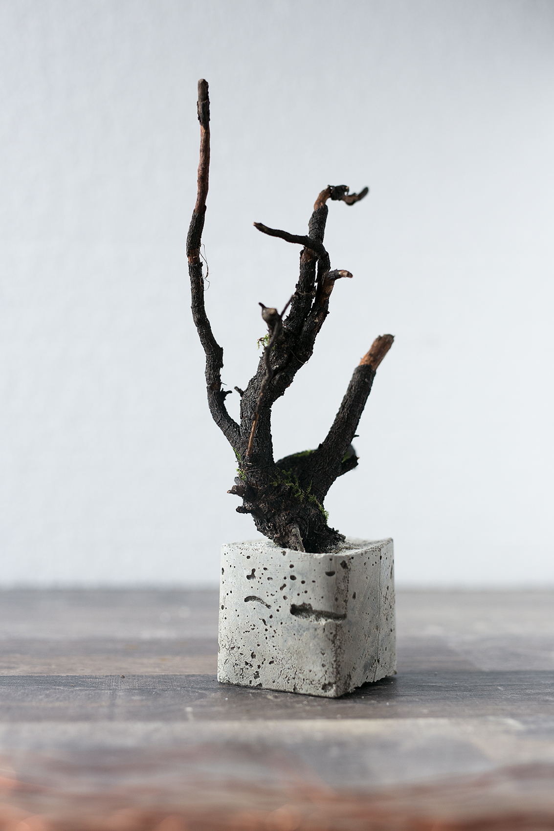 Beton Baum DIY Projekt Grundgerüst