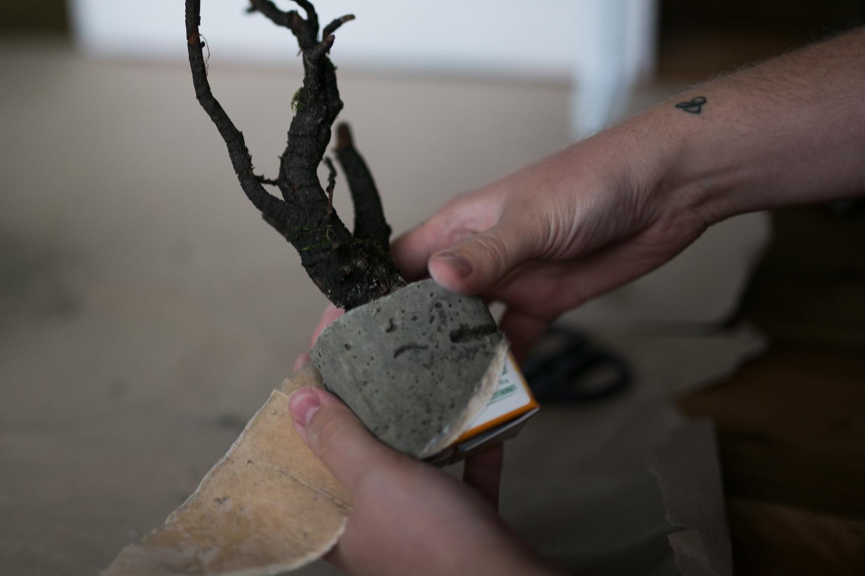 Beton Baum DIY Projekt aus dem Karton befreien
