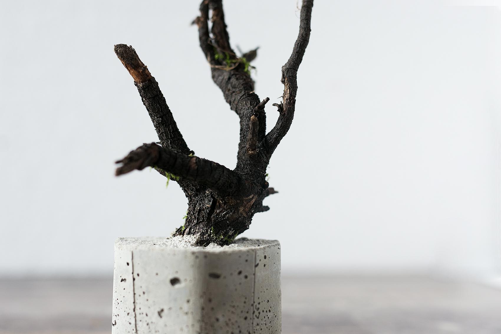 Beton Baum DIY Projekt mit Wurzeln