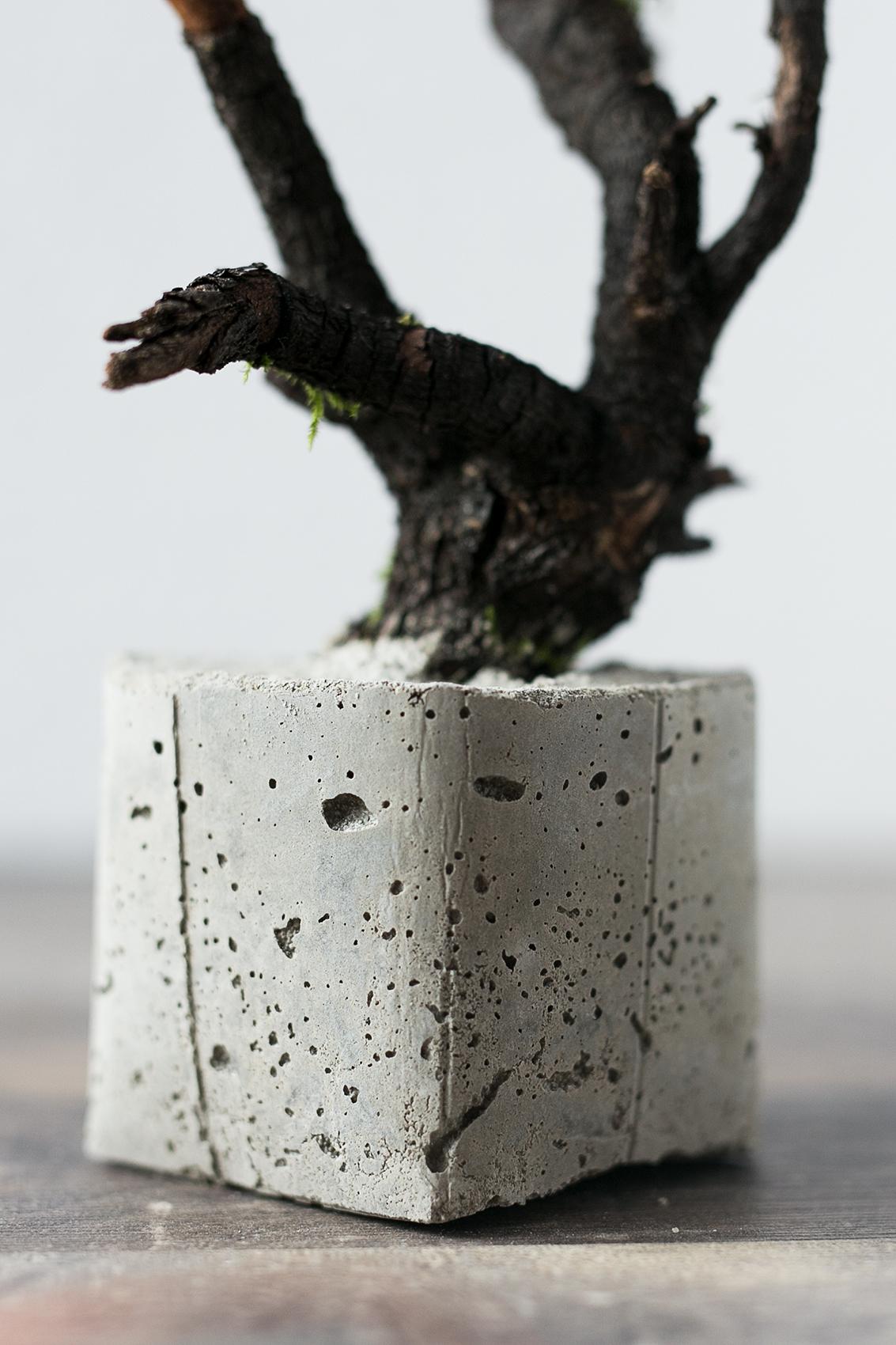 Beton Baum DIY Projekt selber gießen Zuhause