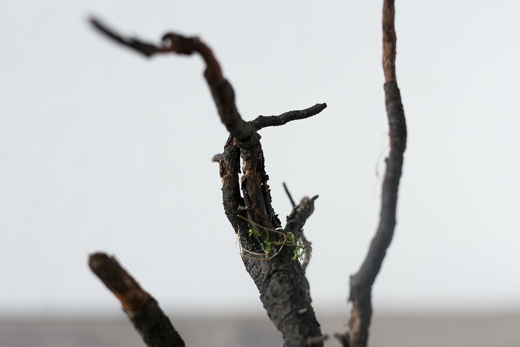 Wurzeln mit Moos Beton Baum DIY Projekt
