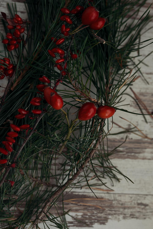 Rote Beeren Tannenreisig