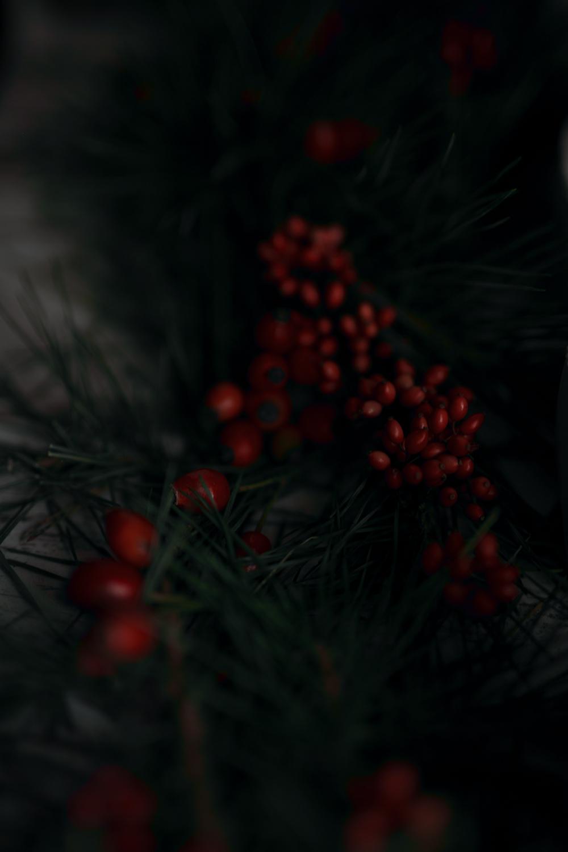 Rote Beeren als Deko für Beton Adventskranz