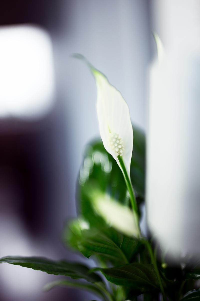 Vertikaler Garten mit luftreinigender Pflanze