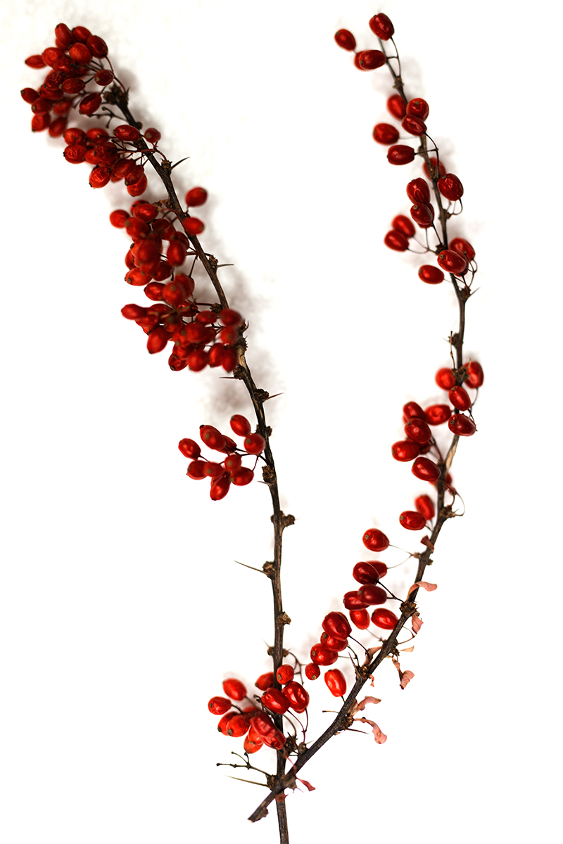 Rote Beeren als Deko für Serviettenringe