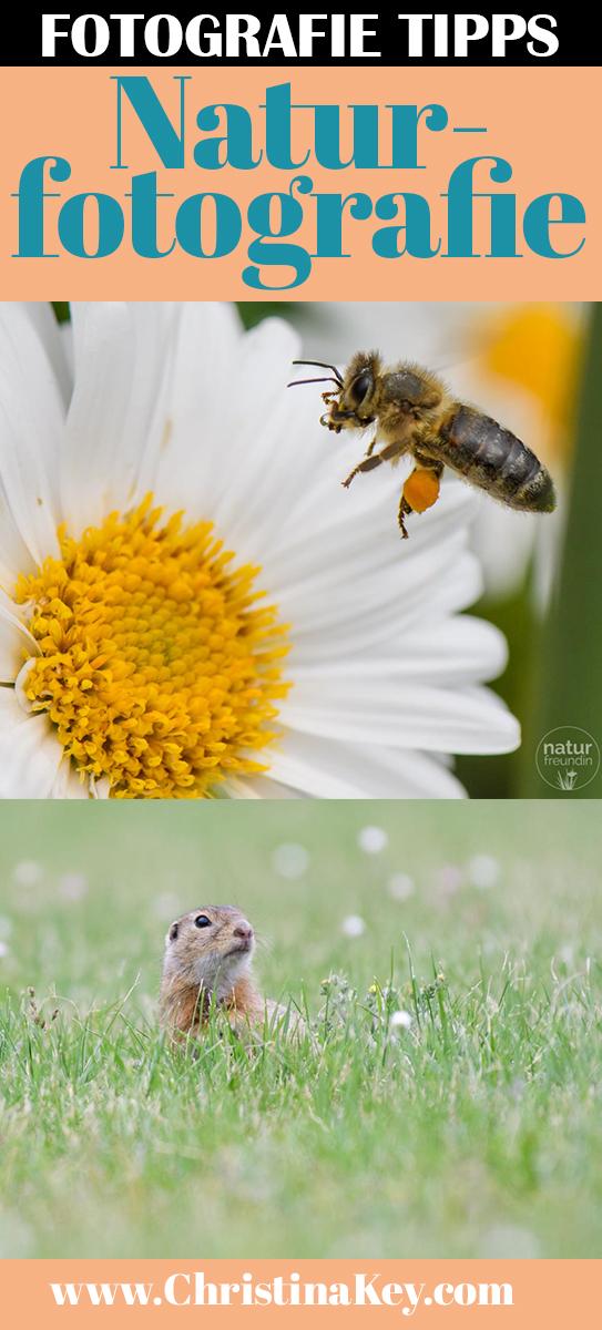 Fotografie Tipps Naturfotografie