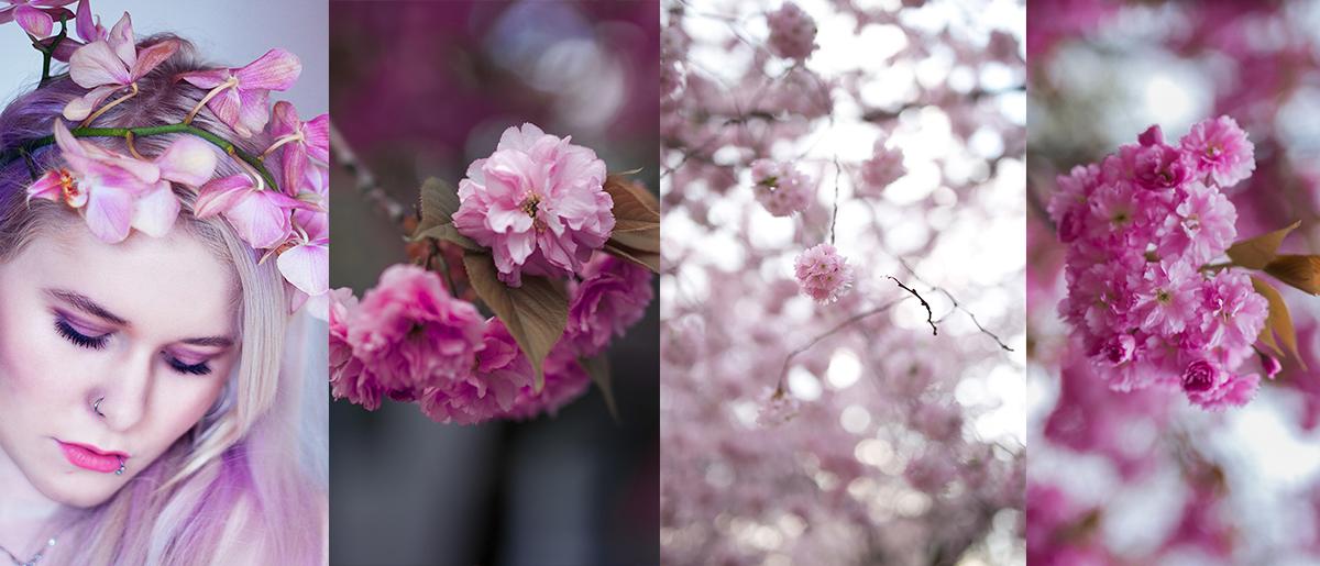 Fotografie Tipps für frühlingshafte Bilder Blüten