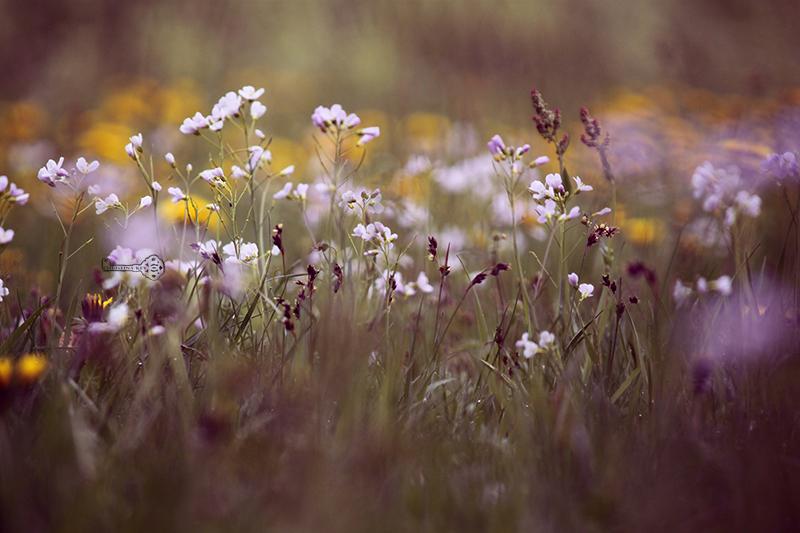 Meine Bildbearbeitung früher vs heute und Foto Tipps Blumenbild