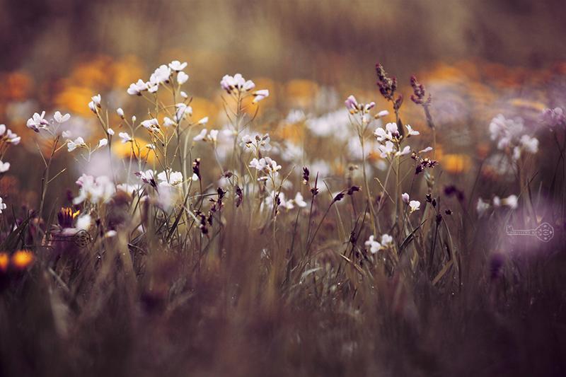 Meine Fotobearbeitung früher vs heute und Foto Tipps Blumenwiese