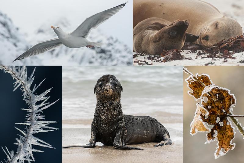 Naturfotografie – Tipps und Tricks für bessere Aufnahmen Foto