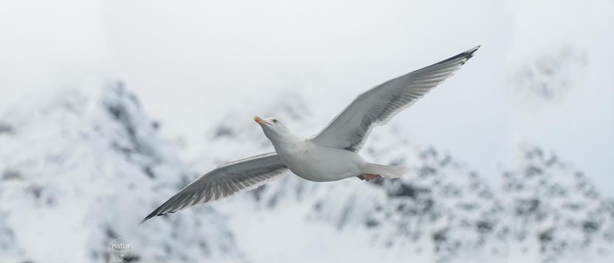 Naturfotografie – Tipps und Tricks für bessere Aufnahmen Möwen