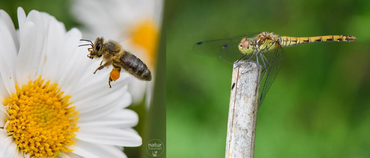 Naturfotografie – Tipps und Tricks für bessere Aufnahmen Makrofotos Tiere