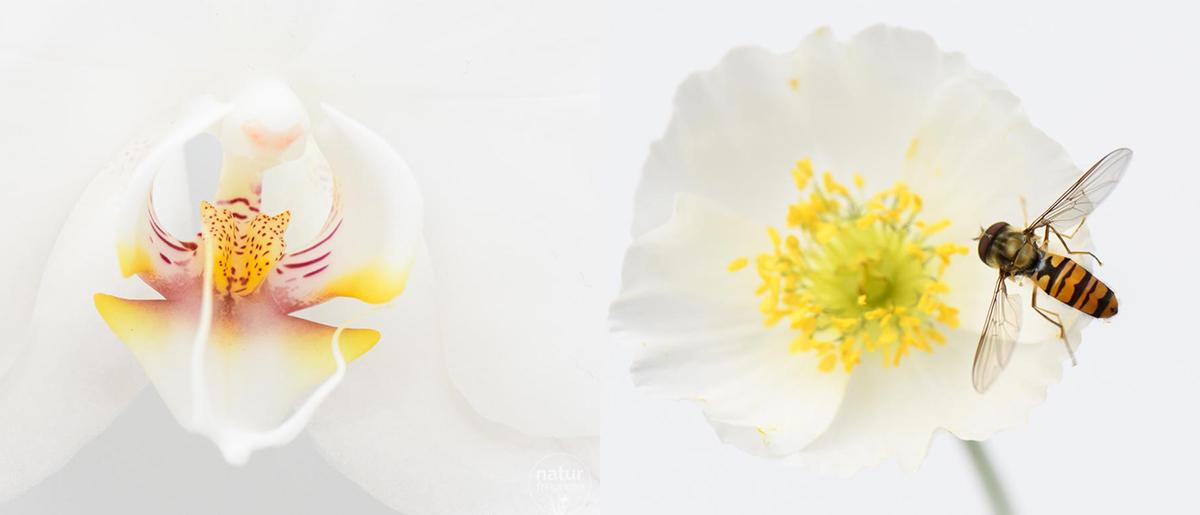 Naturfotografie – Tipps und Tricks für bessere Aufnahmen Makrofotos