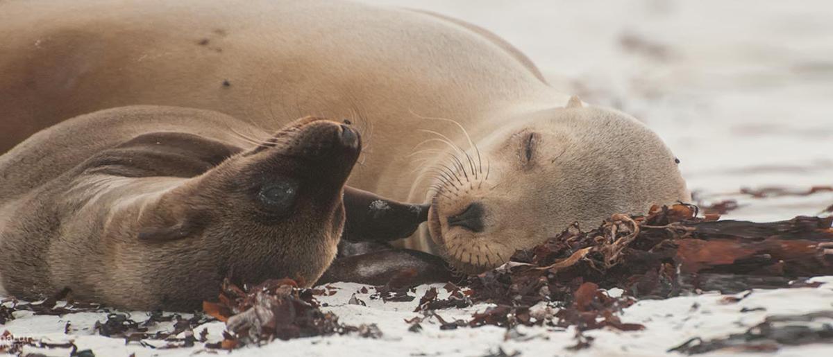 Naturfotografie – Tipps und Tricks für bessere Aufnahmen Seelöwe