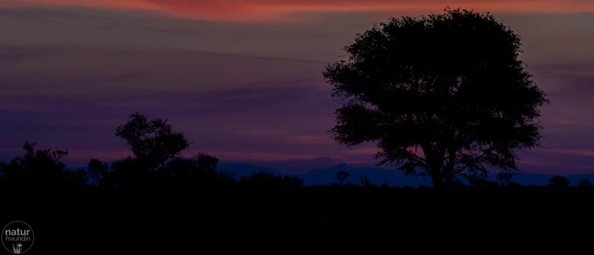 Naturfotografie – Tipps und Tricks für bessere Aufnahmen Sonnenuntergang