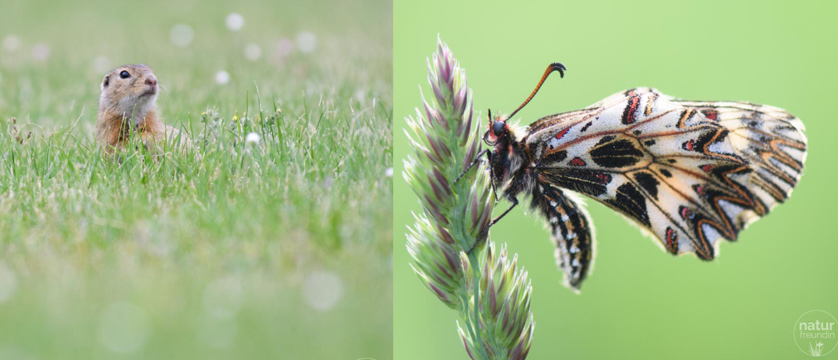 Naturfotografie – Tipps und Tricks für bessere Aufnahmen Tiere