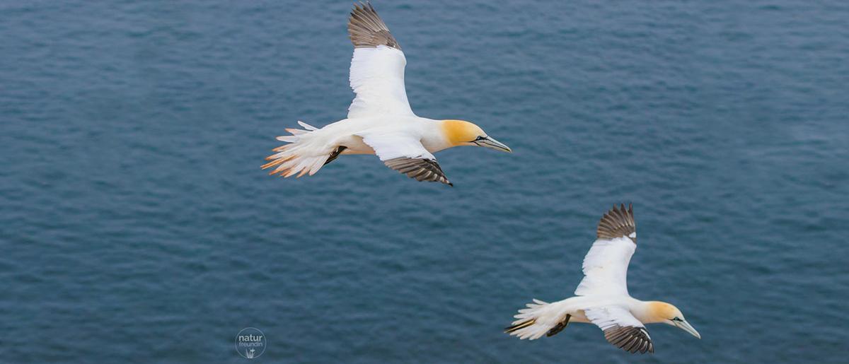 Naturfotografie – Tipps und Tricks für bessere Aufnahmen Vogelfotografie