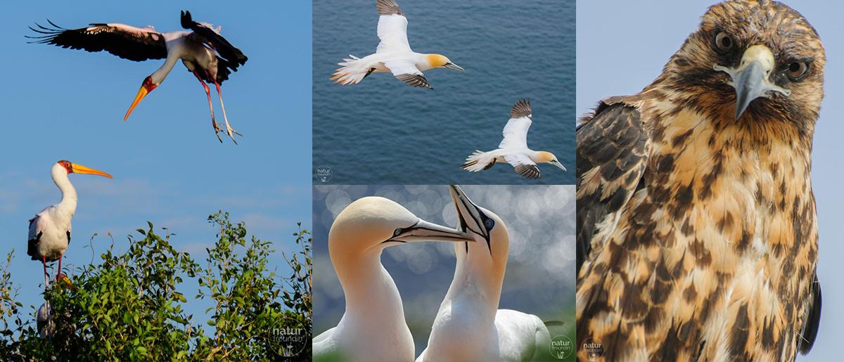 Naturfotografie – Tipps und Tricks für bessere Aufnahmen Vogelfotos scharf