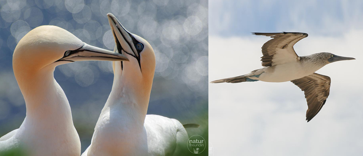 Naturfotografie – Tipps und Tricks für bessere Aufnahmen Vogelfotos