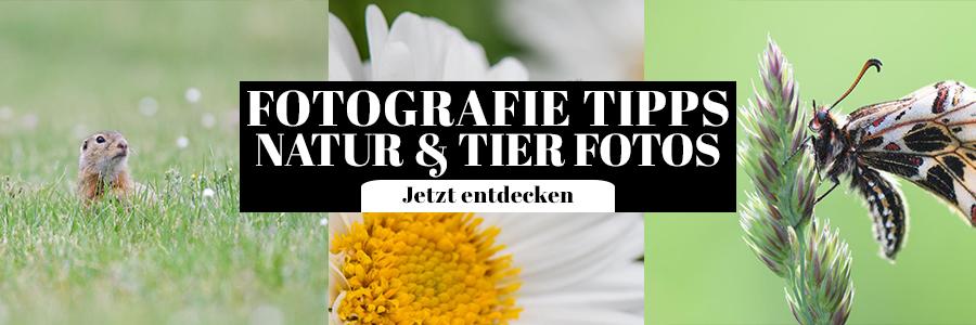 Fotografie Tipps Natur und Tier Fotos