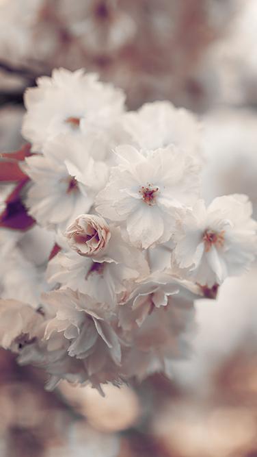 Fotografie Tipps So werden Deine Fotos scharf Blüten