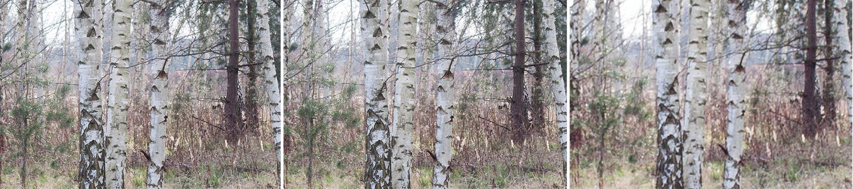 Fotografie Tipps die dich verblüffen werden - Birken unterschiedliche Brennweiten gleicher Bildwinkel