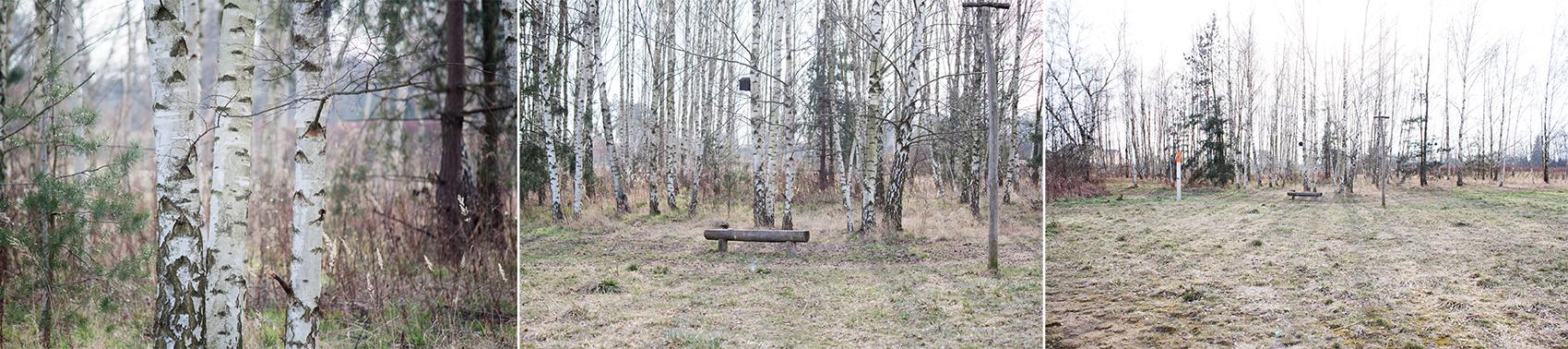 Fotografie Tipps die dich verblüffen werden - Birken unterschiedliche Brennweiten