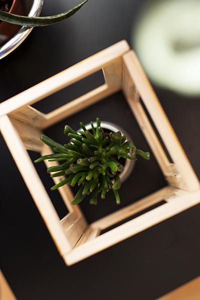 DIY Terrarium Bilderrahmen Ikea Hack von oben