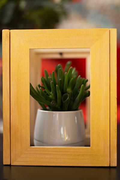 DIY Terrarium picture frame Ikea Hack Cacti