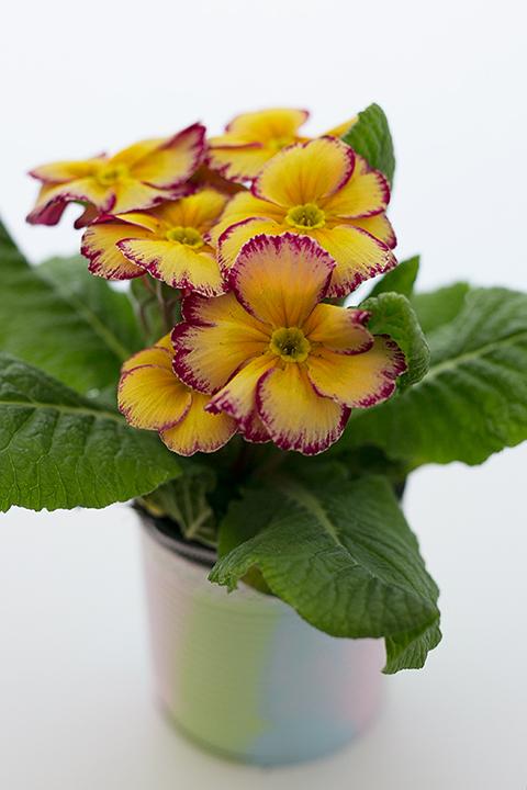 Oster DIY Ideen Blumen Ampel