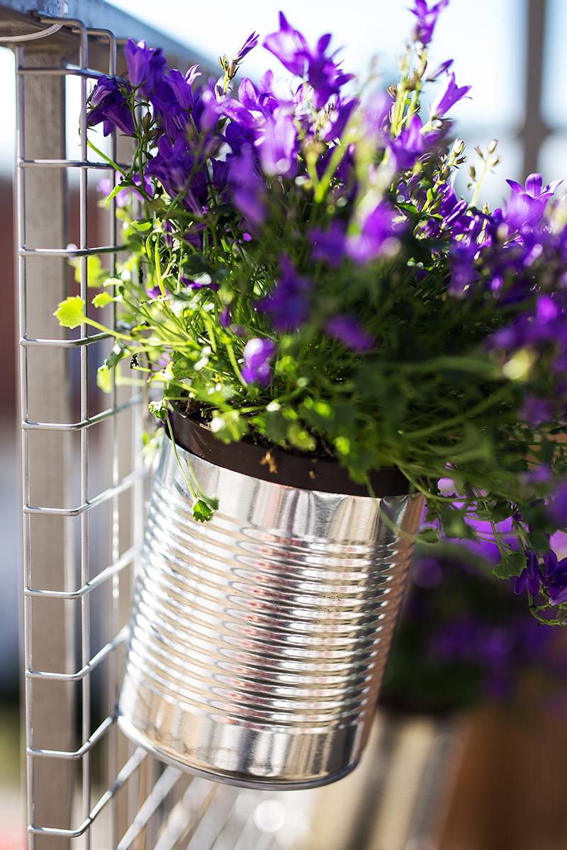 DIY Dosen Blumen Wand Glockenblume