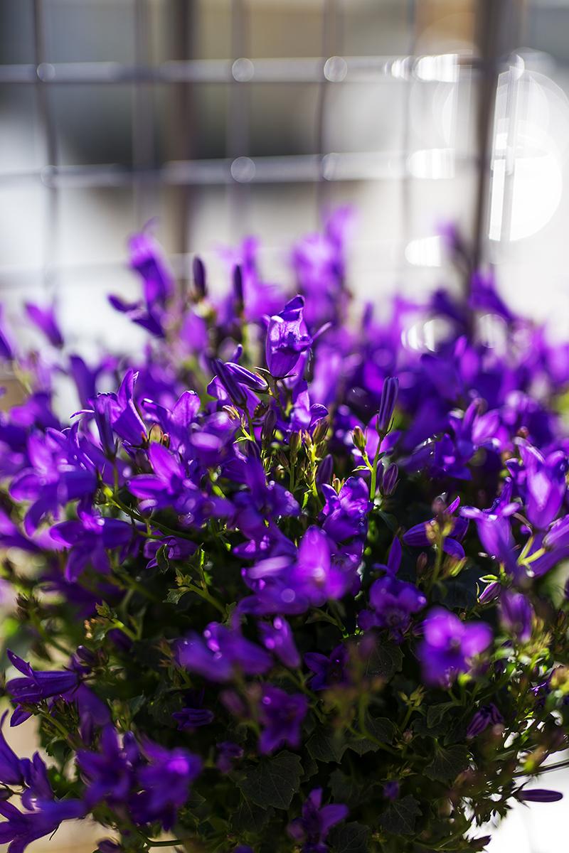 DIY Dosen Blumen Wand Glockenblumen
