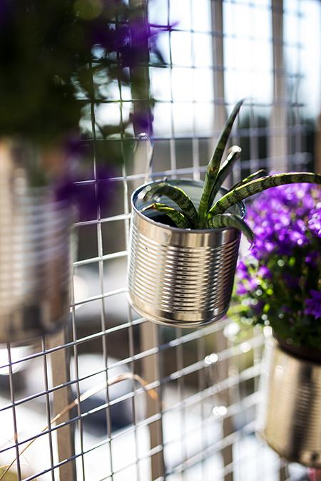 DIY Dosen Blumen Wand Kaktus