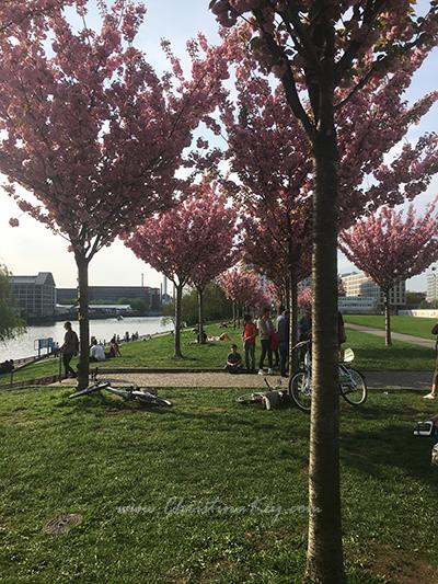 East Side Gallery Berlin Kirschblüten Bäume