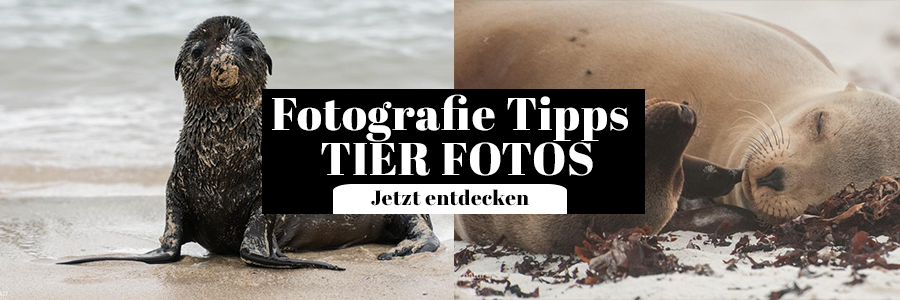 Fotografie Tipps Tier Fotos