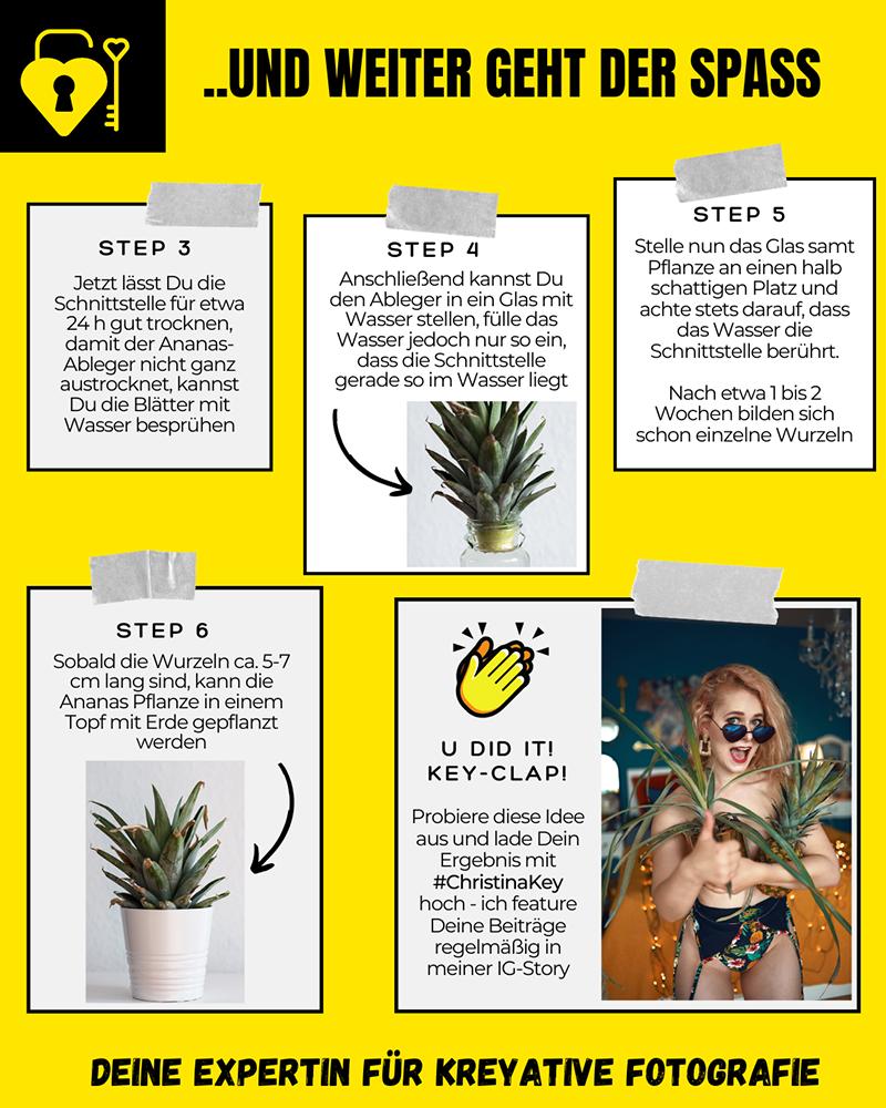 Ananas vermehren Pflanze Anleitung